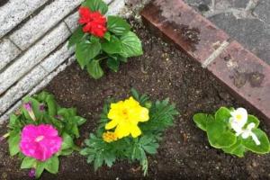 花壇づくりをした! ホームセンター コメリの苗が安かった