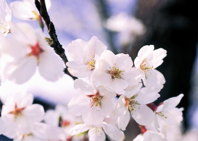 小学生の卒業式・女の子に人気の卒服サイト10選!