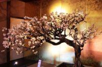 慶雲館の盆梅展へ行ってきた!