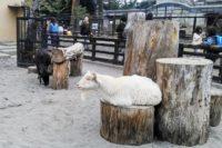 井の頭自然文化園(動物園)へ行ってきた! 吉祥寺駅からのアクセスは?