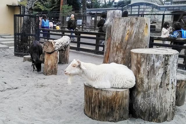 井の頭自然文化園(動物園)へ行ってきた!