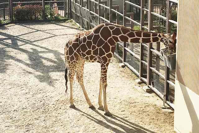 京都市動物園へ行ってきた! 割引券・クーポン券は? | ウェルの雑記ブログ